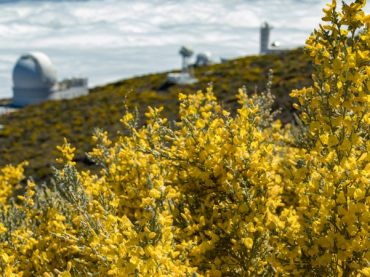 When golden flowers cover the landscapes of Spain