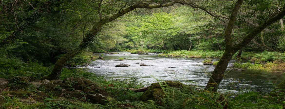 View of the river in Fragas do Eume, Galicia