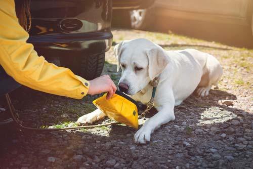 preguntas frecuentes Camino Santiago mascotas