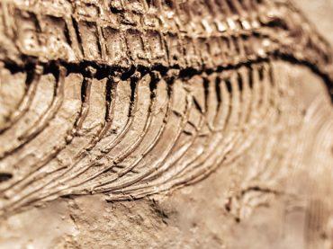Dinosaur footprints in Spain, 13 places to meet them