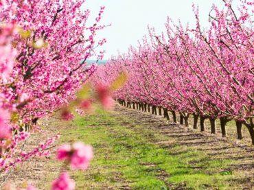 7 places to enjoy flowering in Spain