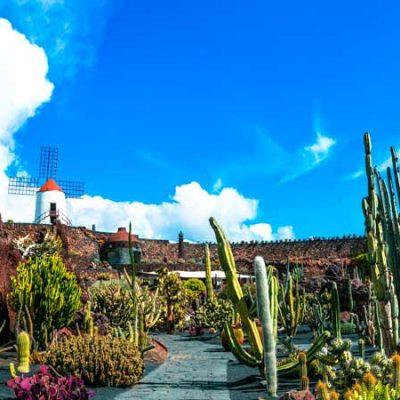 Cactus Garden of Guatiza