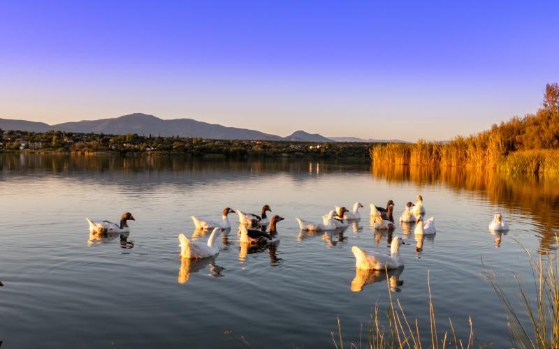 Cazalegas Reservoir
