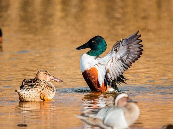 Lagoons of La Mancha where to watch birds