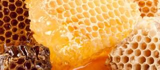 miel patones