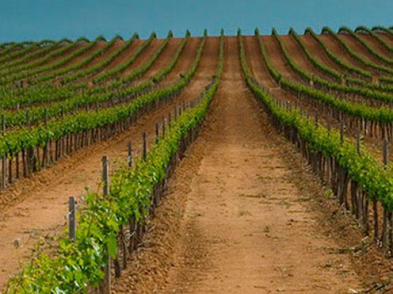 Ribera del Duero Wine: a Spanish Designation of Origin