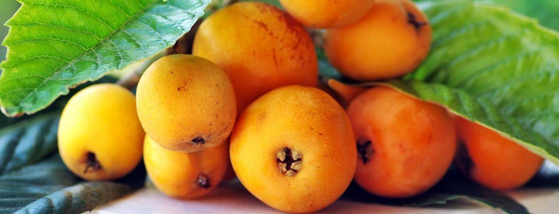 Benefits and properties of loquat