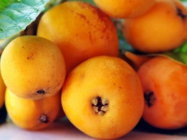 Benefits and properties of loquat