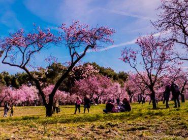 Quinta de los Molinos, a garden in the capital   A Weekend Getaway
