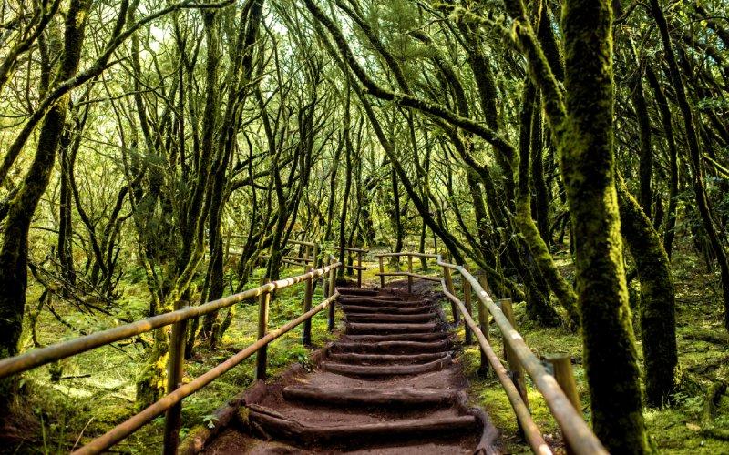 Garajonay Reserve