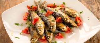 sardinas baga