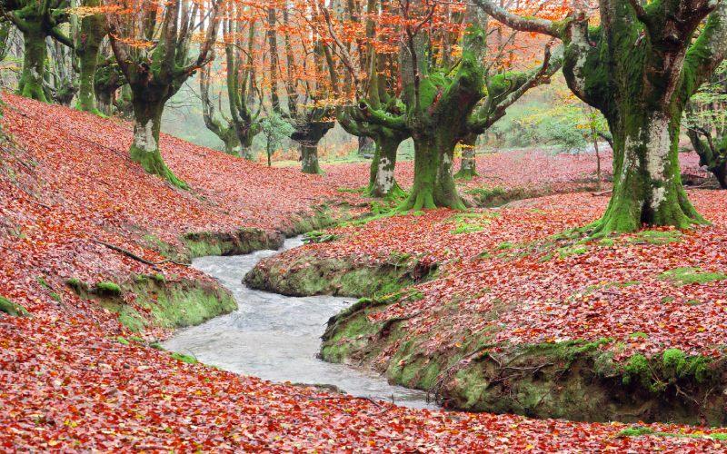 Otzarreta beech forest