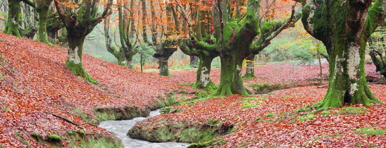 Oztarreta beech forest
