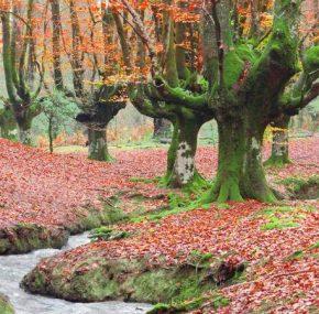 The Otzarreta beech forest, a bliss for the 5 senses | A Weekend Getaway
