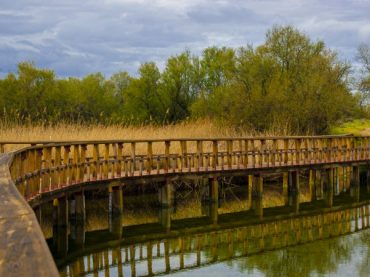 Las Tablas de Daimiel, the infinite walkways that protect the wetland