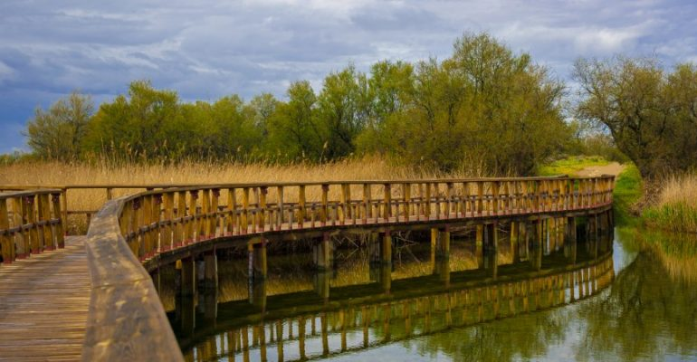 Las Tablas de Daimiel, the infinite walkways that protect the wetland